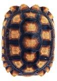Tortoise shell on a white background. Stock Photos