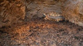 Tortoise sitting in a pen under heat lamp stock footage