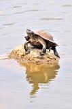 Tortoise sitting on rock. In the sun Stock Photo