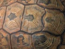 Tortoise skorupa Obrazy Royalty Free
