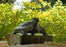 Tortoise spout in shrine, Kyoto Japan. Royalty Free Stock Photo