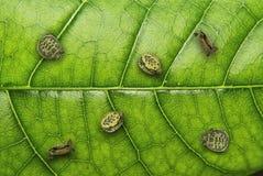 Tortoise sul foglio Fotografie Stock