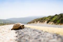 Tortoise sulla strada fotografia stock