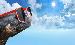 Tortoise with sunglasses enjoying sun on a hot summer day Royalty Free Stock Images