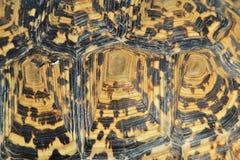 Tortoise tło - Afrykański przyroda wzór Obraz Stock