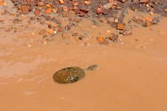 Tortoise in tanzania national park Stock Image