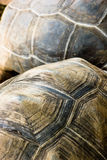 Tortoise texture. Tortoise, natural animal textures, wonderful colors Stock Photography