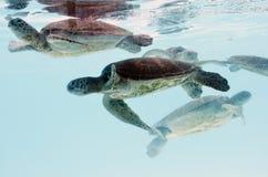 Tortoise. Stock Photo