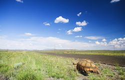 Tortoise on a trip Royalty Free Stock Images
