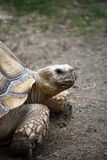 Tortoise Turtle Royalty Free Stock Photo