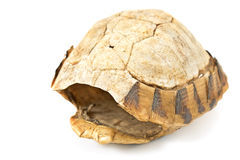 Tortoise   turtle shell Royalty Free Stock Images