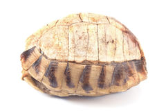 Tortoise  turtle shell Royalty Free Stock Photos