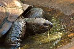 Tortoise, Turtle, Terrestrial Animal, Emydidae