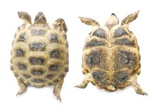 Tortoise up and down | Isolated Royalty Free Stock Photos