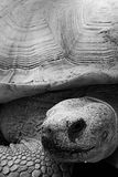 Tortoise At Wildlife World Zoo. Litchfield Park, Arizona stock images