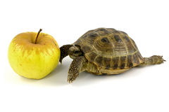 Tortoise and yellow apple Royalty Free Stock Photos