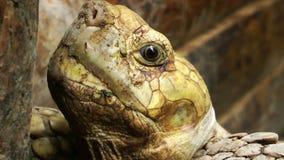 Tortoise in Zoo stock video