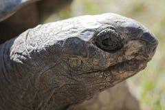 Tortoise at zoo Stock Photos