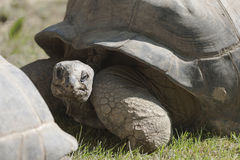 Tortoise at zoo Stock Photo