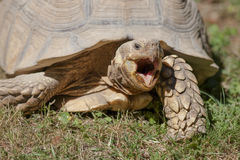 Tortoise at zoo Royalty Free Stock Images