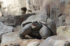 Tortoise3 irradiado imagem de stock