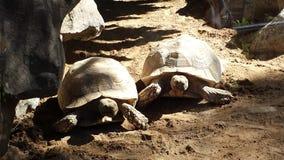 tortoises royalty-vrije stock foto's