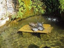 tortoises Royalty-vrije Stock Fotografie