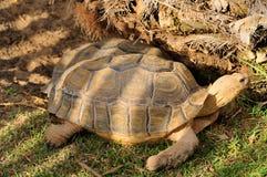 tortoises royalty-vrije stock afbeelding