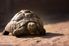 tortoises Στοκ φωτογραφία με δικαίωμα ελεύθερης χρήσης