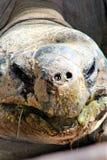 tortoises stock fotografie