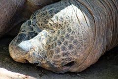 tortoises royalty-vrije stock afbeeldingen