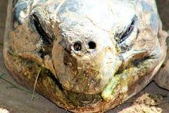 tortoises stock foto