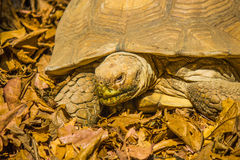 Tortoises in bangkok Royalty Free Stock Photos