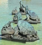 Tortoises Lecture Frogs on Belle Isle. James Scott Fountain in Detroit Stock Photo