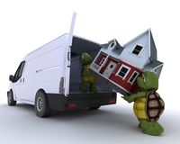Tortoises loading a house into a house into a van Stock Image