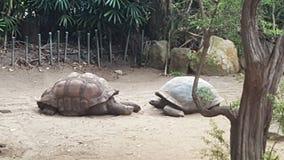 Tortoises over 100 years old, at Toronga Zoo, Mosman, NSW, Australia stock photography