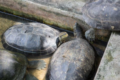 Tortoises in park Royalty Free Stock Photos