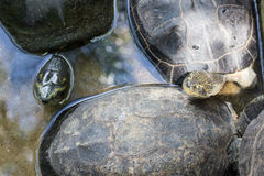 Tortoises in park Royalty Free Stock Photography