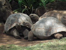 Tortoises relaxing in the shad Royalty Free Stock Photos
