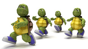 Tortoises running in sneakers Stock Photos