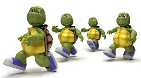 Tortoises running in sneakers Stock Photos