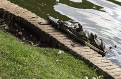 Tortoises sunbathing Royalty Free Stock Photography