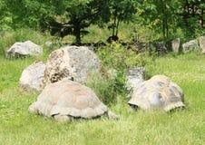 Tortoises Royalty Free Stock Photos