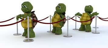 Tortoises waiting in line Royalty Free Stock Photo