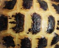 tortoiseshell Fotografía de archivo libre de regalías