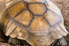 tortoiseshell stockbilder