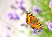 Tortoiseshell butterfly Stock Photo