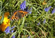 Tortoiseshell butterfly stock image