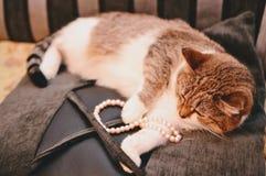 A tortoiseshell cat on a black cushion Royalty Free Stock Photos