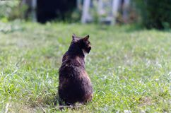 Tortoiseshell cat with green eyes outdoors squinting in the sun Stock Images